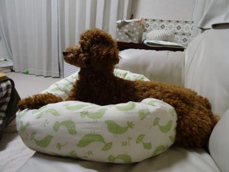 ベッド・綿増量後