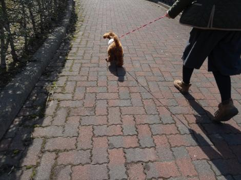 日曜日のお散歩
