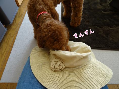 帽子にびっくり