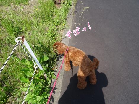暑い日のお散歩