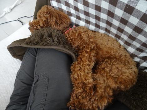 のんびりお昼寝