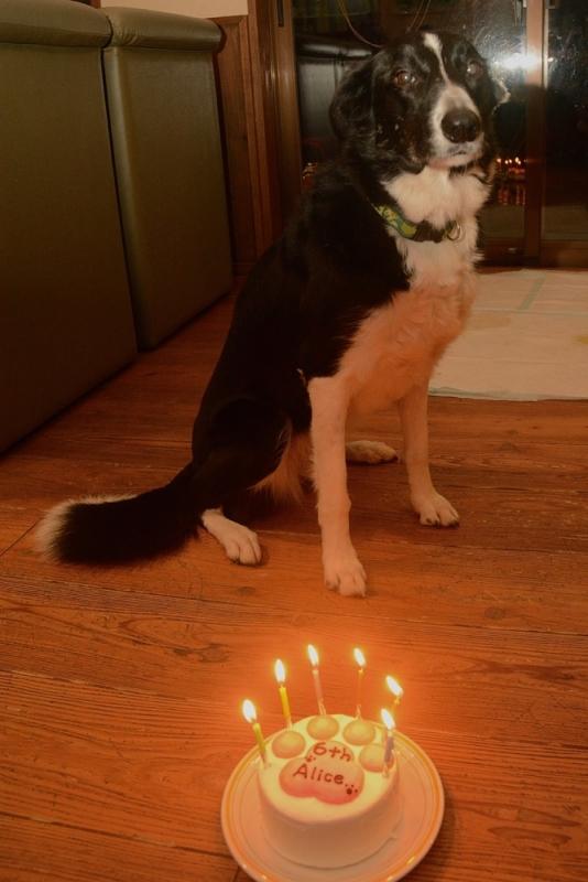 20150214アリス誕生日2