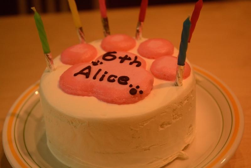 20150214アリス誕生日1