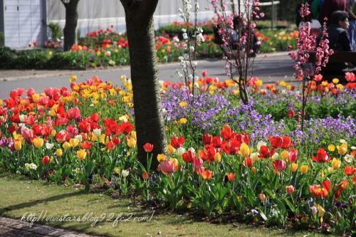 吉田公園03