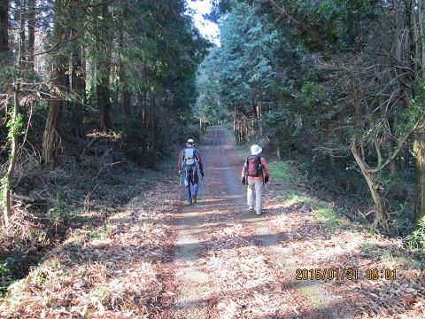 大岳入口手前の林道