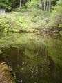 裏山にある池