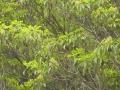 モチの木と花