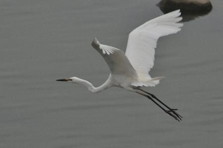 alba-breeding4