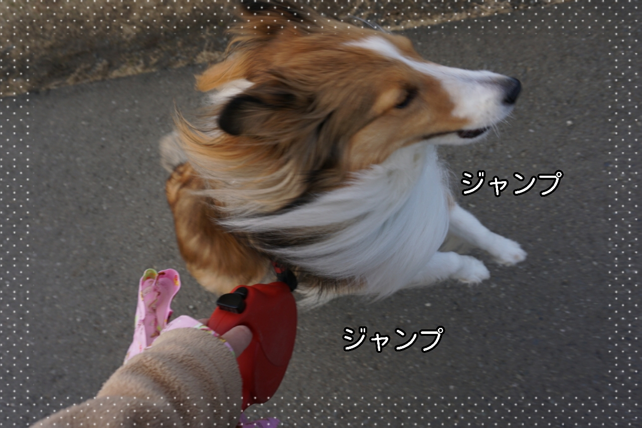 2015-02-19-21-36-53_deco.jpg