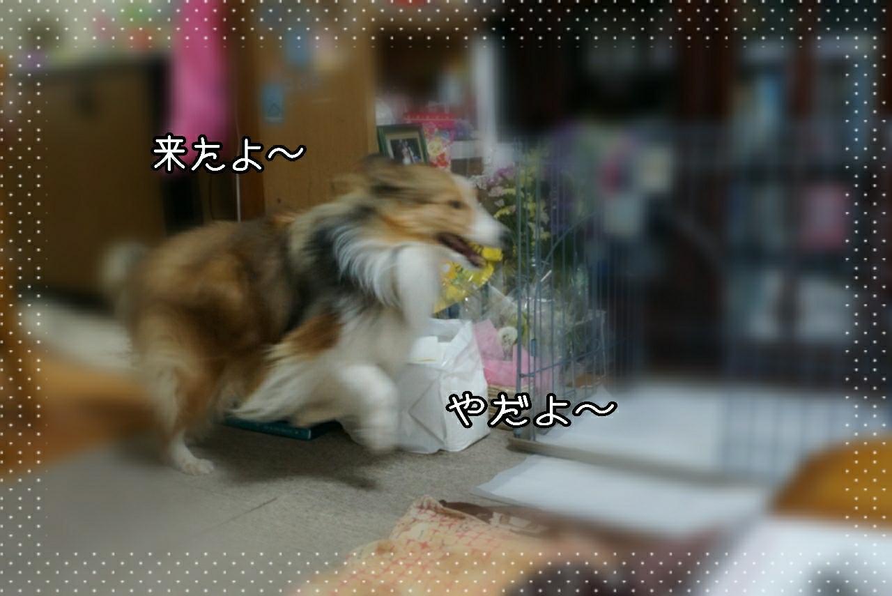2015-03-03-23-54-17_deco.jpg