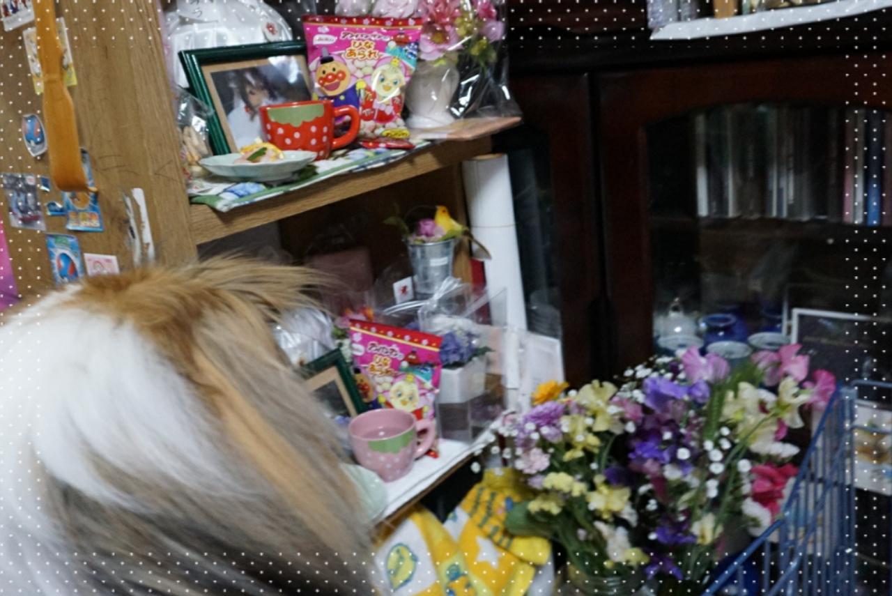 2015-03-04-05-48-01_deco.jpg