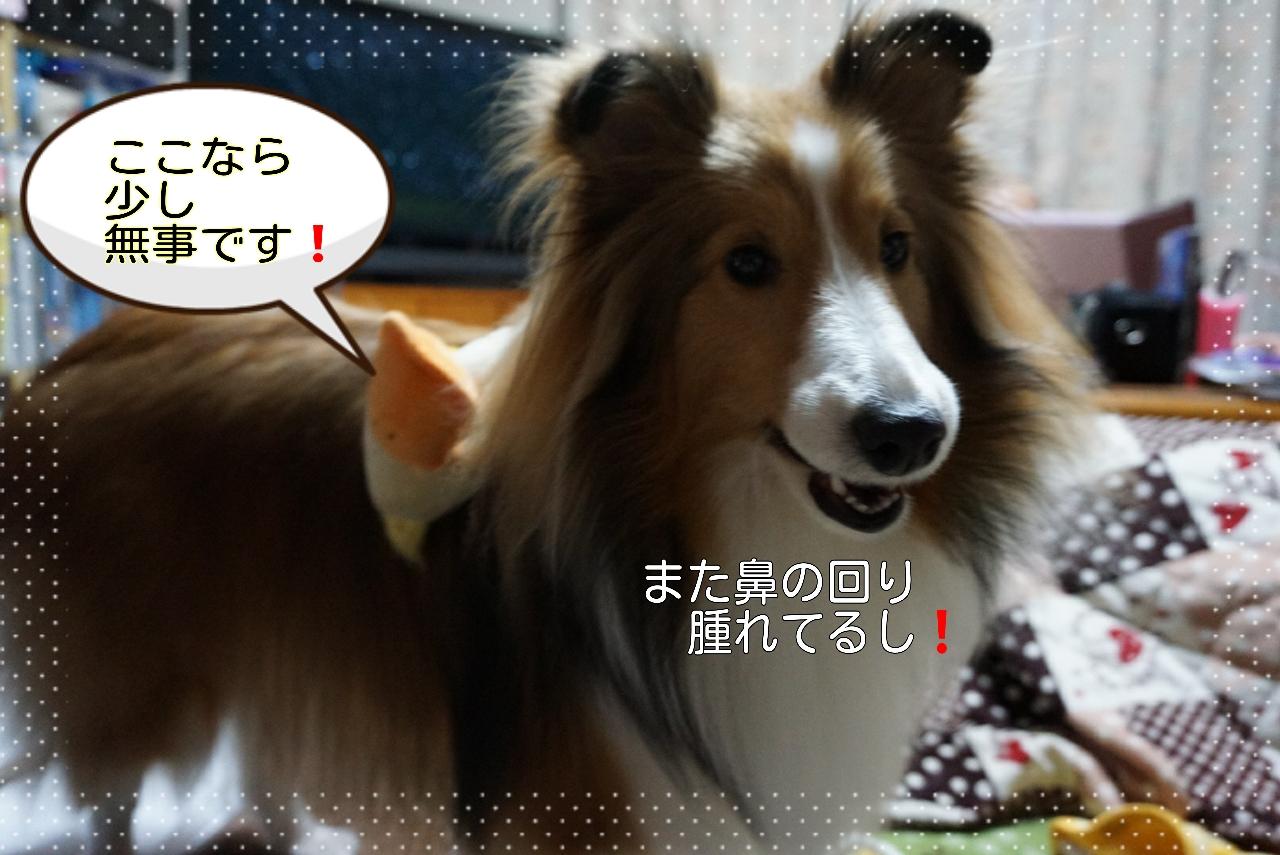 2015-03-11-07-35-51_deco.jpg