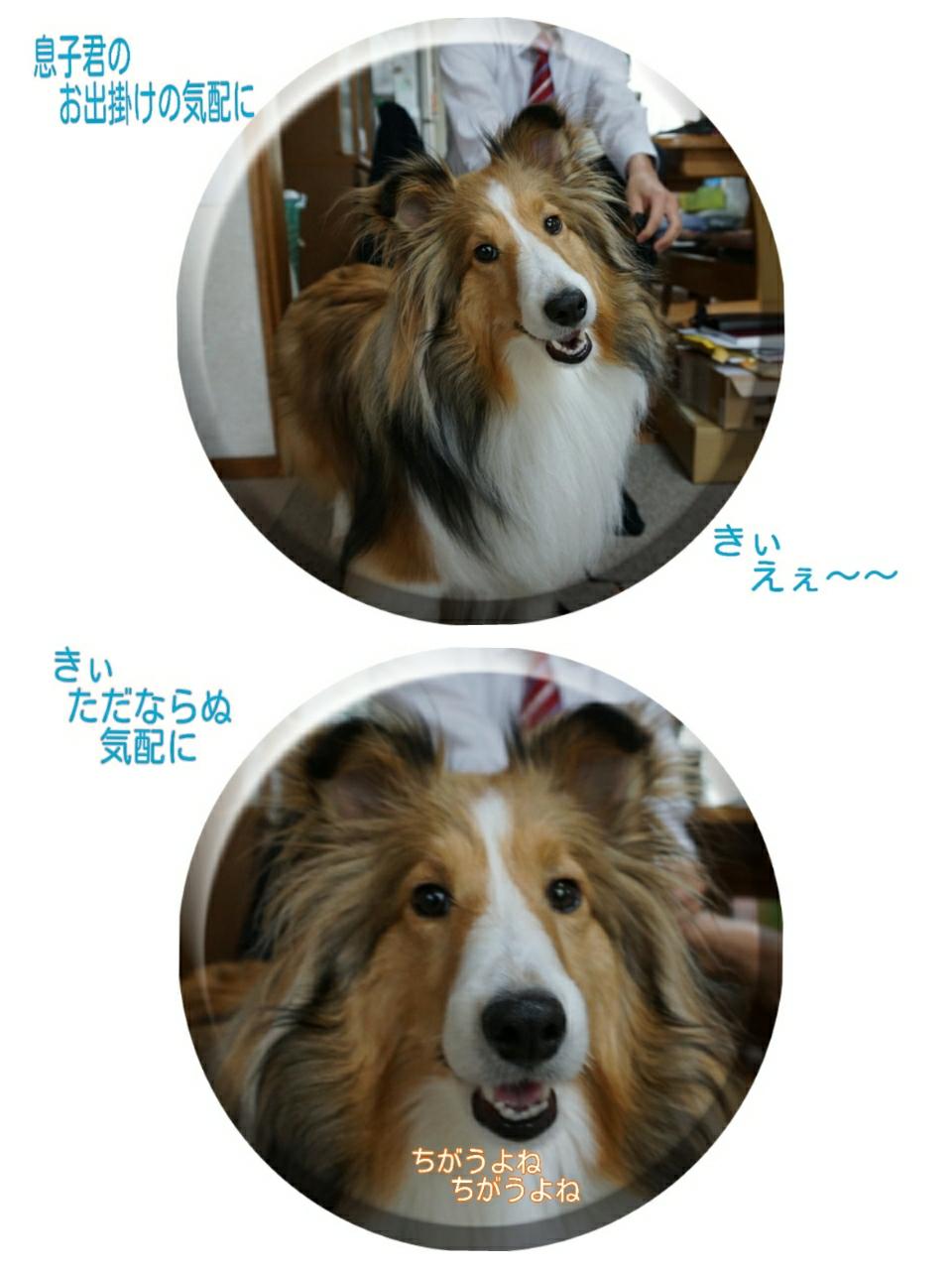 2015-04-01-10-51-17_deco.jpg