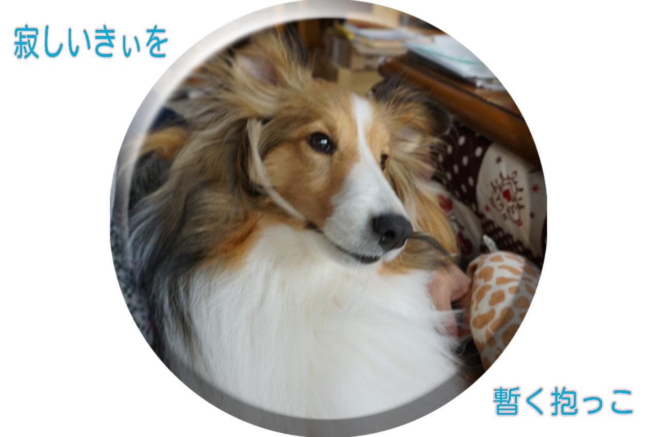 2015-04-01-11-05-31_deco.jpg