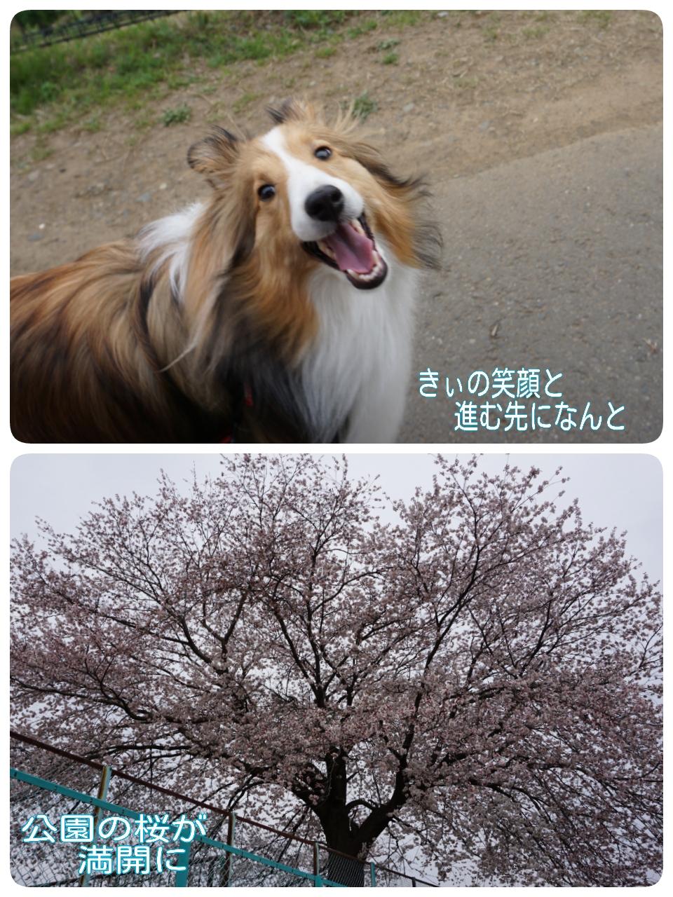 2015-04-01-14-28-36_deco.jpg