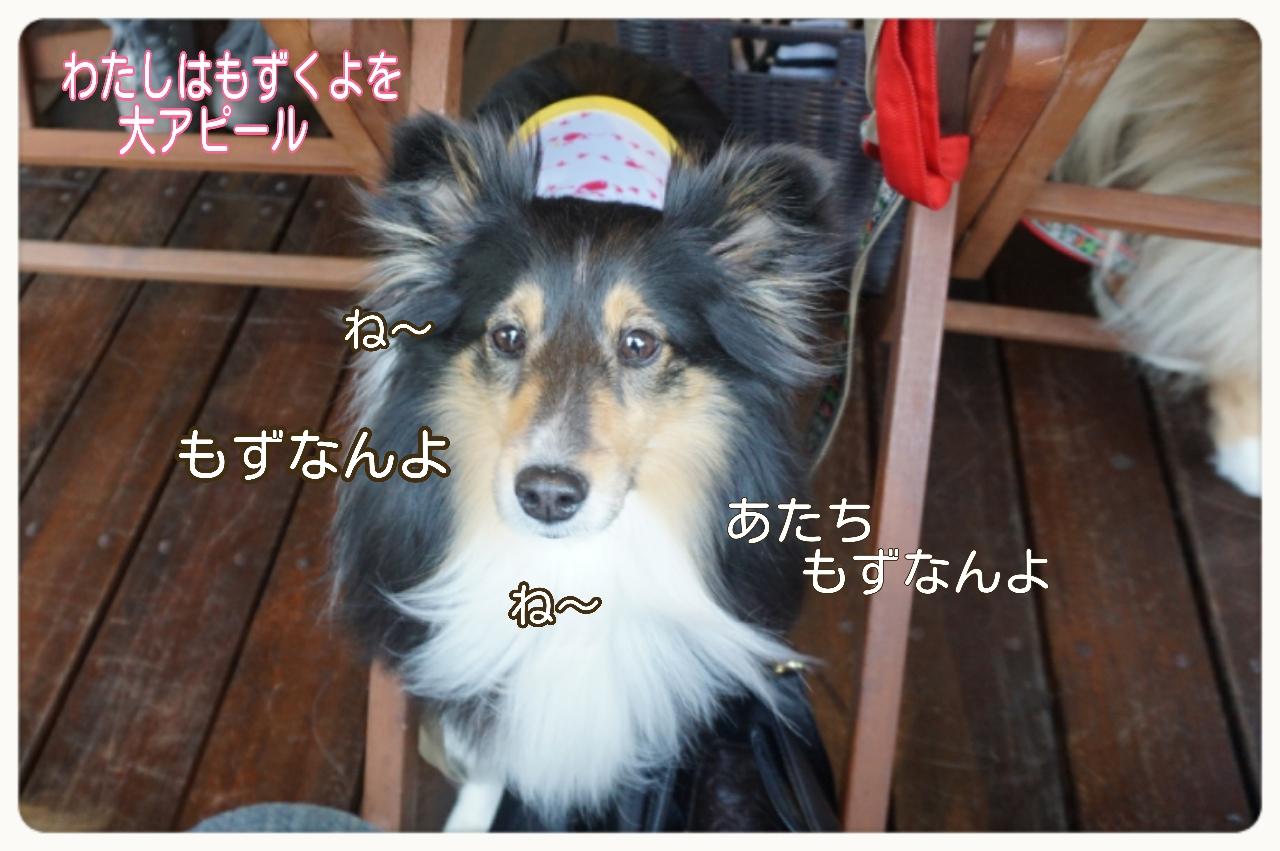 2015-04-13-14-13-17_deco.jpg