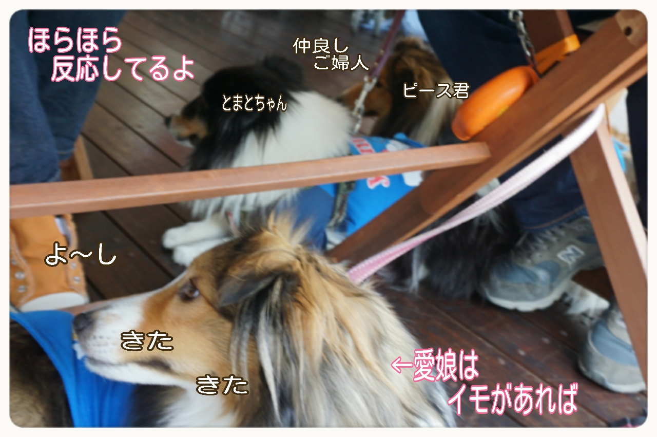 2015-04-13-14-40-02_deco.jpg