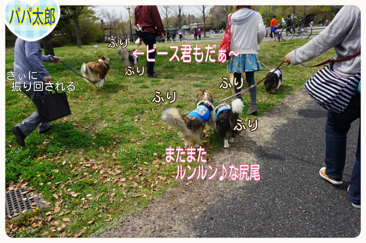 2015-04-13-15-11-59_deco.jpg