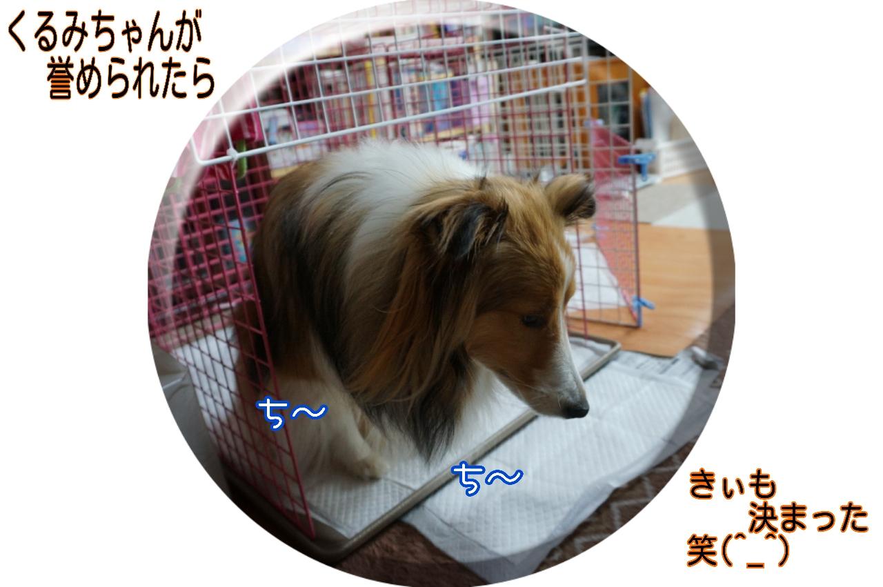 2015-05-06-18-00-43_deco.jpg