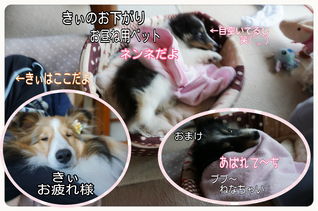 2015-05-10-14-26-27_deco.jpg