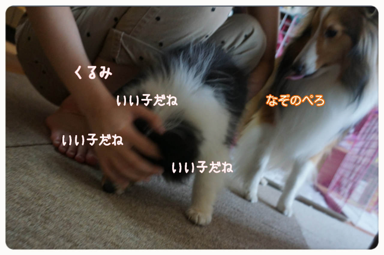 2015-05-14-15-27-43_deco.jpg