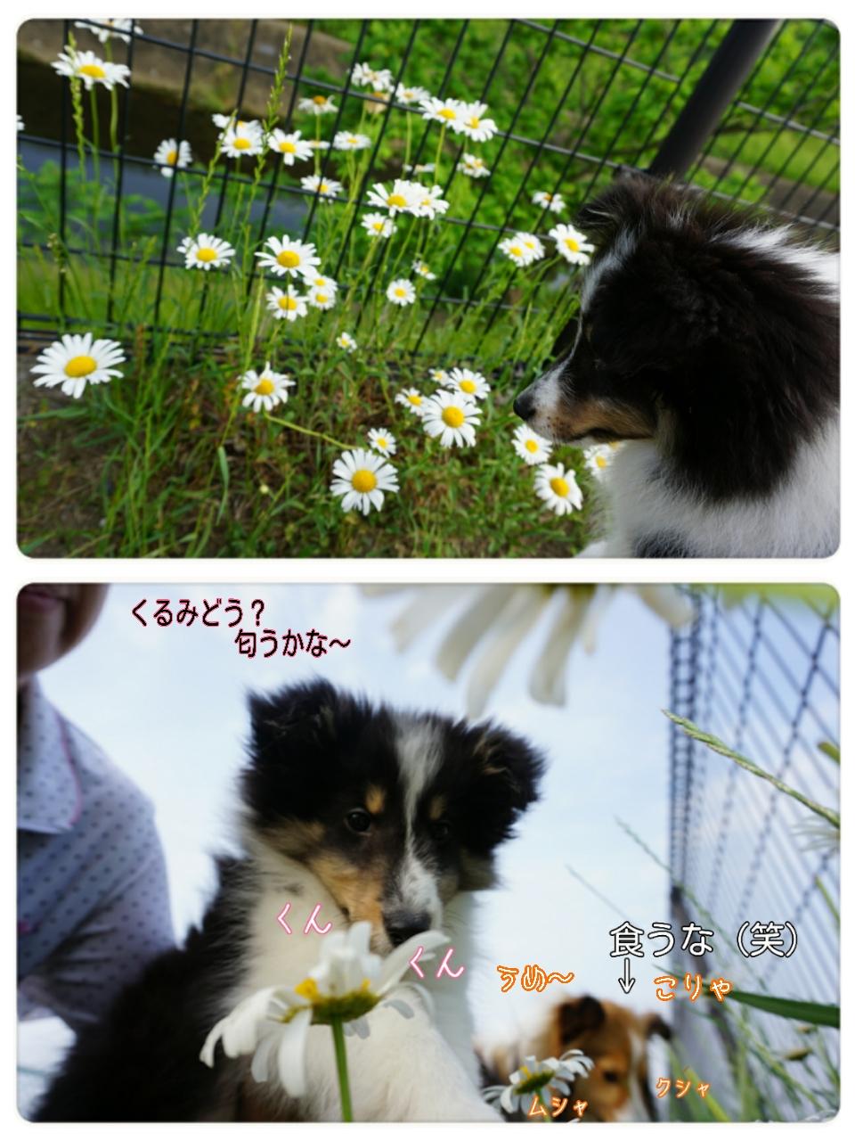 2015-05-20-21-25-10_deco.jpg