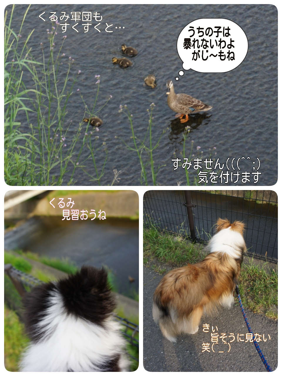 2015-05-20-21-38-14_deco.jpg