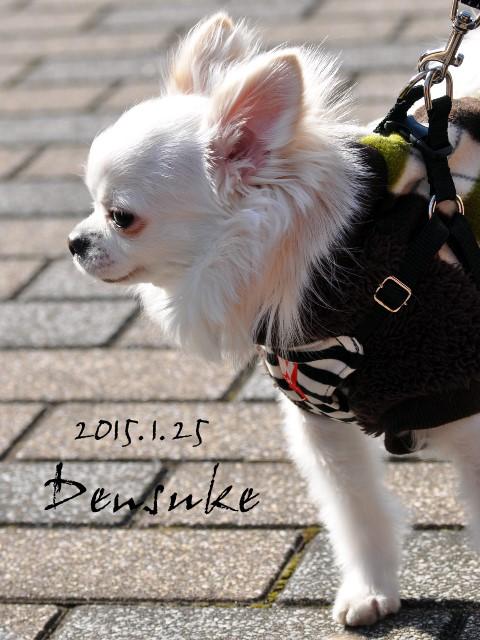 densuke001.jpg