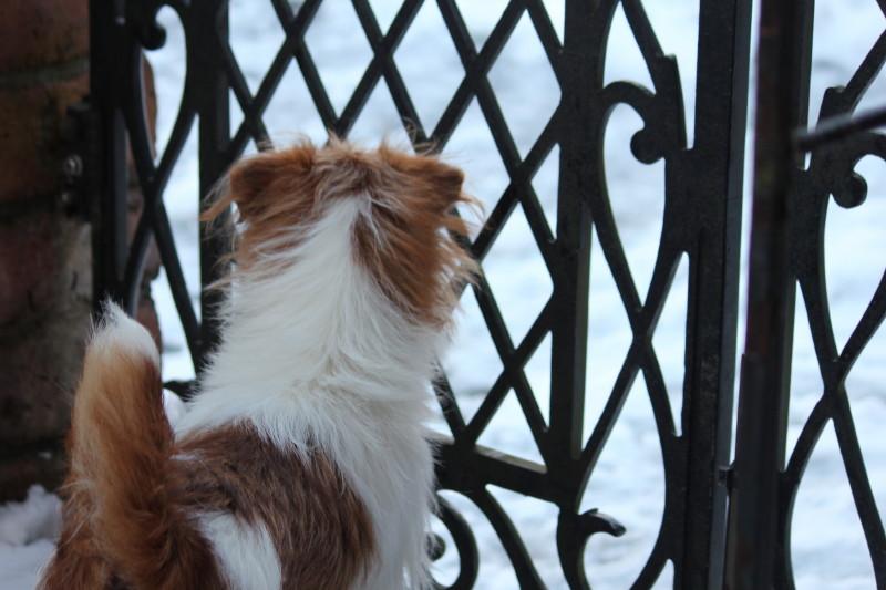 初めての雪IMG_0363_1