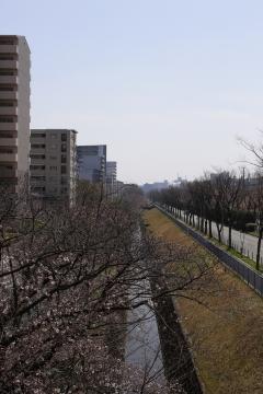 20150330桜3