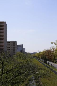 20150423北千里の桜3