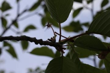 20150428北千里の桜