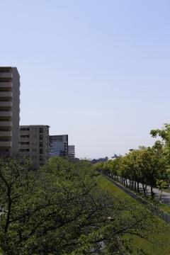20150430北千里の桜3