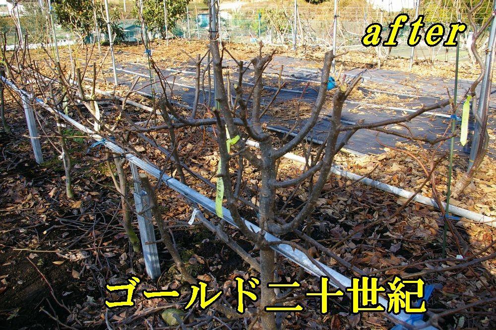 1A_20seiki1228c1.jpg