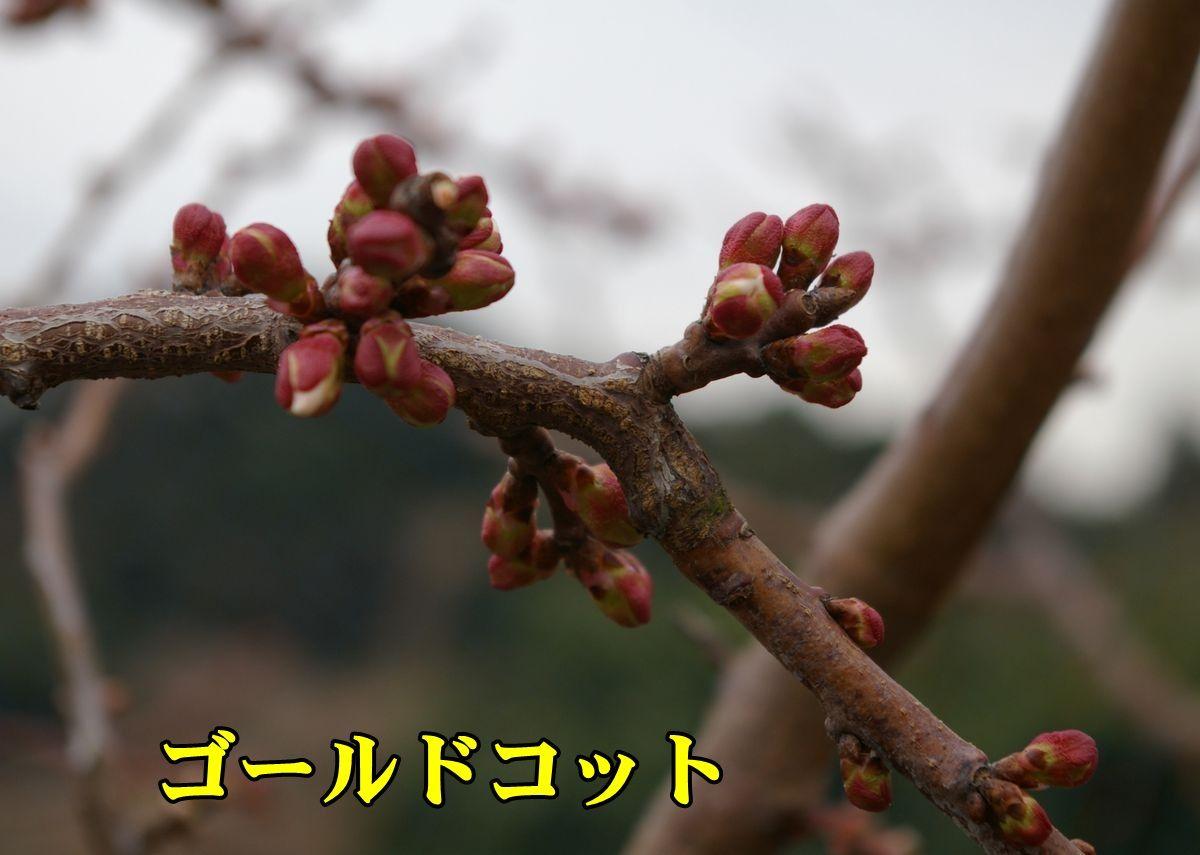 1A_Gcot0306_0c1.jpg