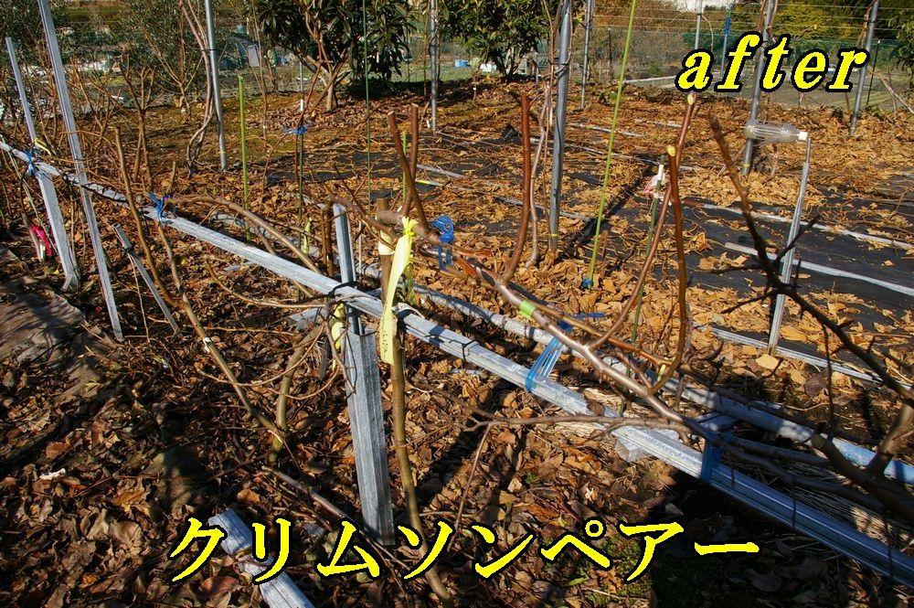 1A_crimuson1228c1.jpg