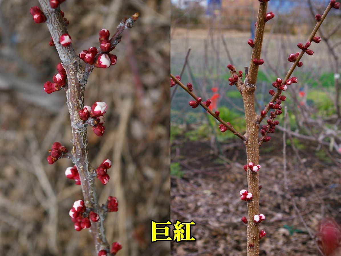 1A_kyokou0309_0c1.jpg
