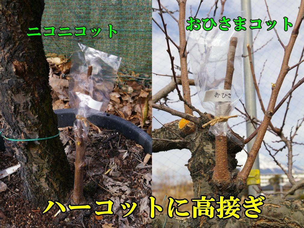 1A_niko0114c2.jpg