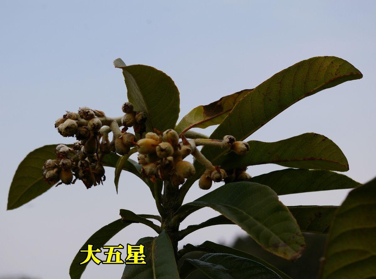 1B_dai5sei0101_0c2.jpg