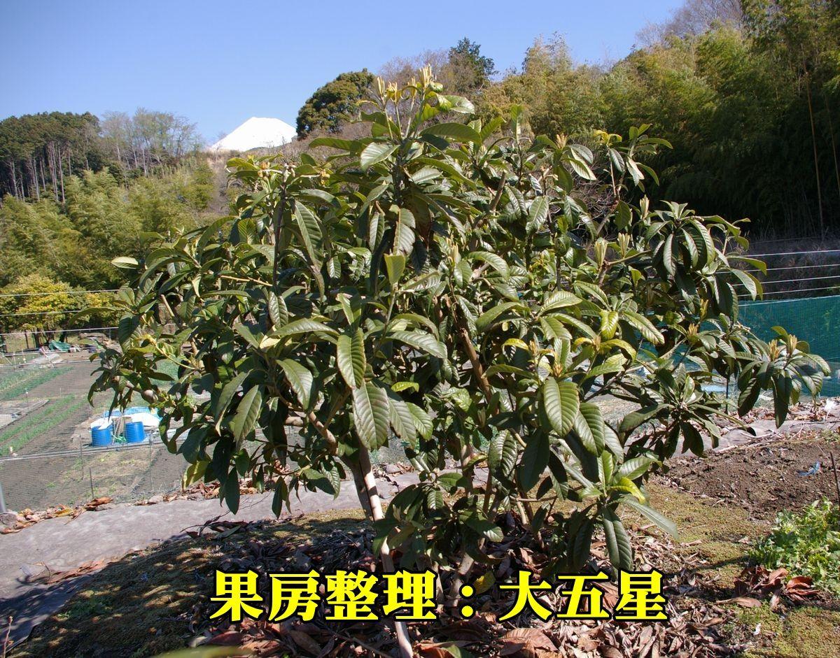 1B_dai5sei150327_013.jpg