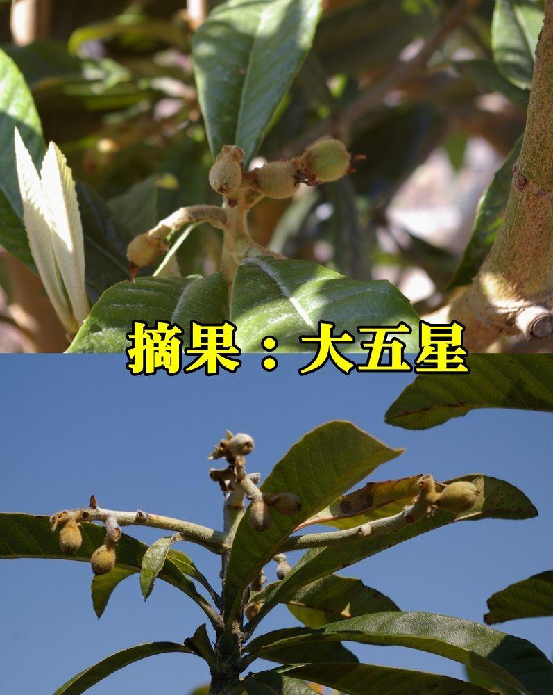 1B_dai5sei150327_017.jpg