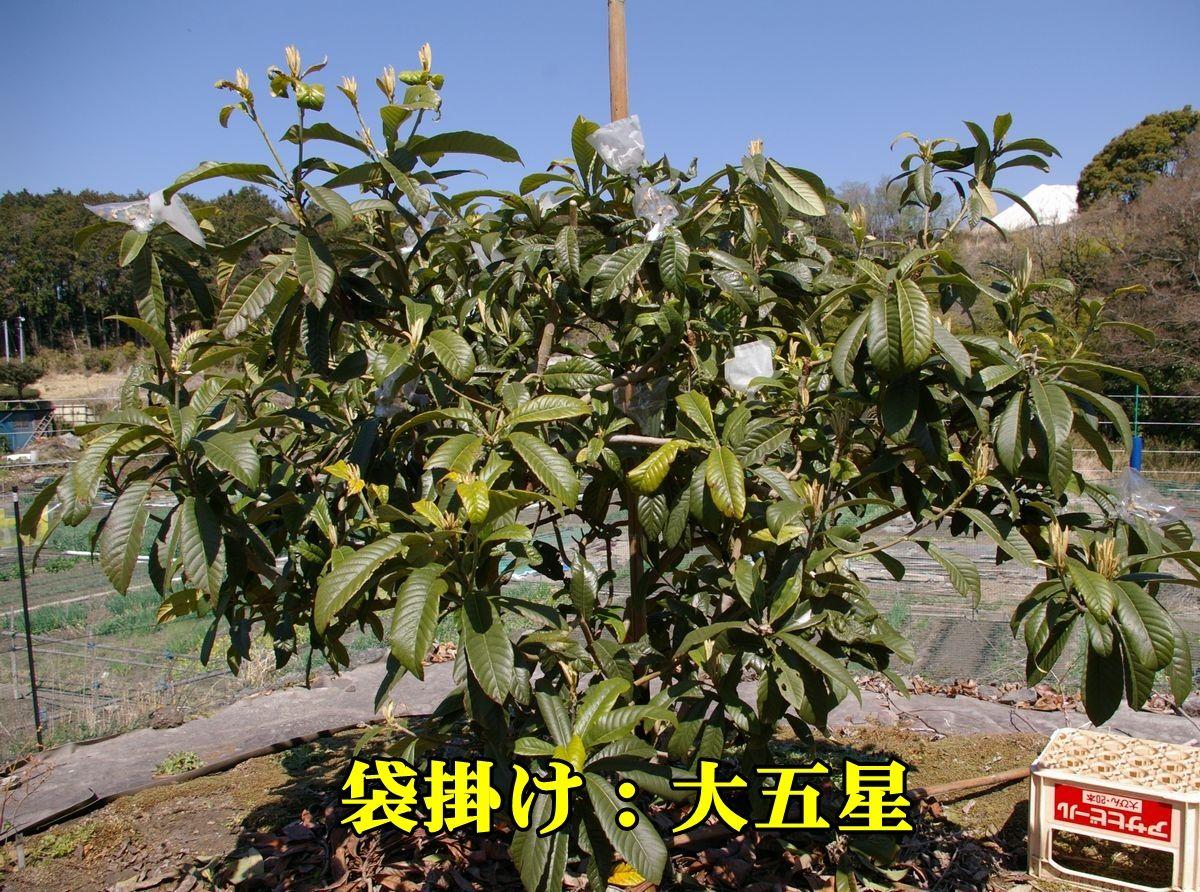 1B_dai5sei150327_020.jpg