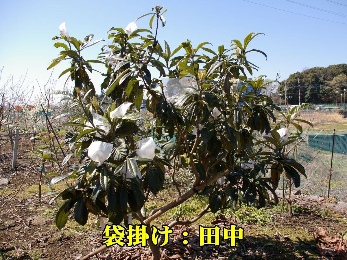 1B_fukuro150327_018.jpg