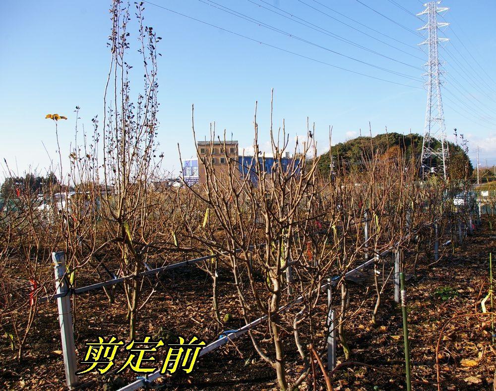 1B_nasi1228c2.jpg