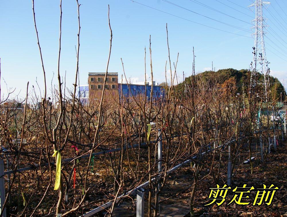 1B_nasi1228c3.jpg