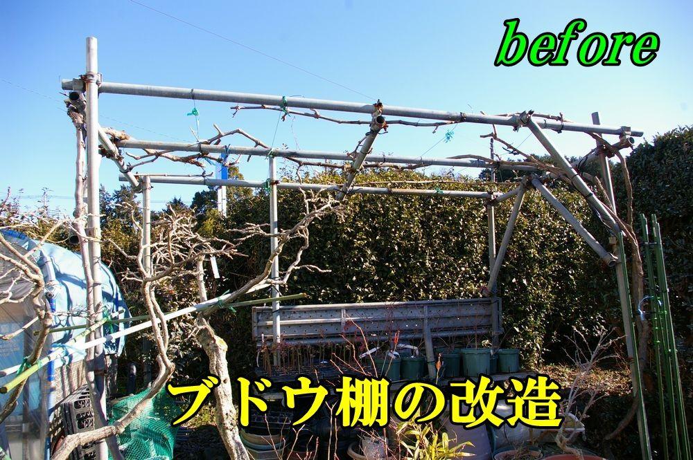 1B_syain0118c2.jpg