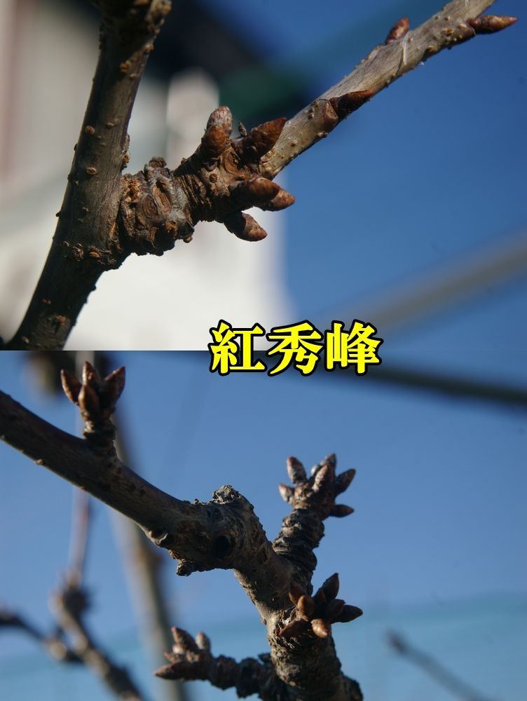 1B_syuho0110c1.jpg