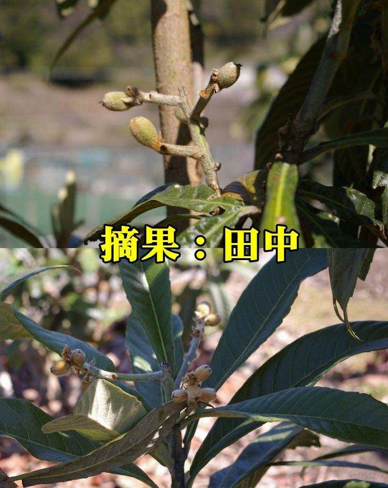 1B_tanaka150327_009.jpg