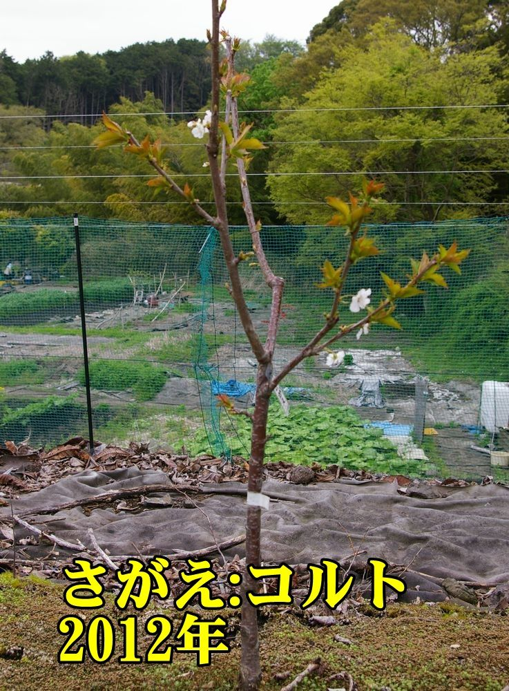 1C2012sagae150419_013.jpg