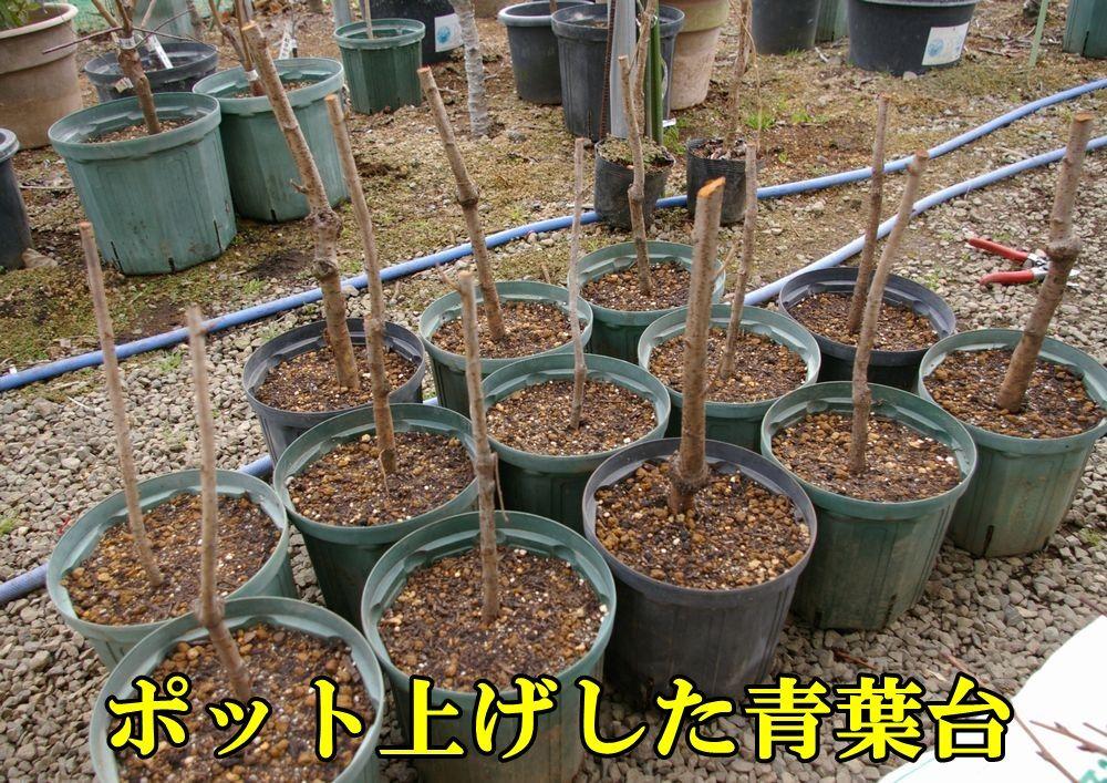 1C_aoba0126c1.jpg